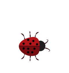 ladybug sign in the frame beautiful red ladybird vector image
