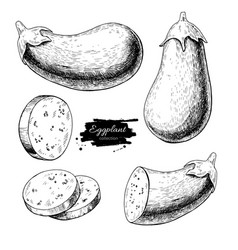 Eggplant hand drawn set vector