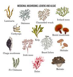 Medicinal mushrooms lichens and seaweeds vector