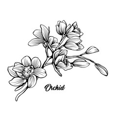 orchid branch hand drawn ink pen vector image