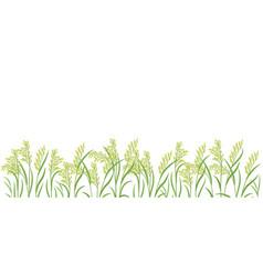 Rice plant green field horizontal banner oryza vector