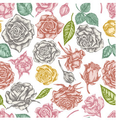seamless pattern with hand drawn pastel roses vector image