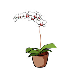 Flowering orchid in a clay pot element of home vector