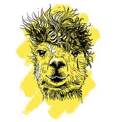 lama hand drawn print for t-shirts vector image