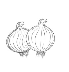 Line fresh onion natural vegetable nutrition vector