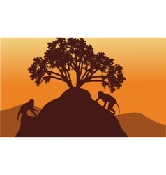 Monkey in hills scenery at sunset vector