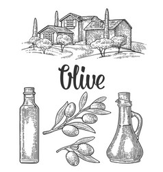 set olive bottle glass branch with leaves rural vector image