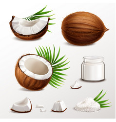 coconut realistic set vector image
