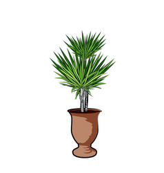 Palm in a clay pot element of home decor the vector