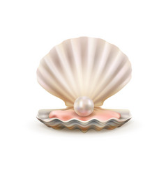 pearl in open shells scallop seashell 3d vector image