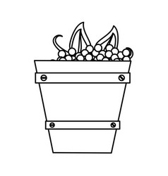 wooden basket with harvest grapes thin line vector image