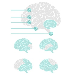 Brain graphic elements vector image vector image