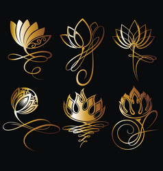 lotus flowers vector image