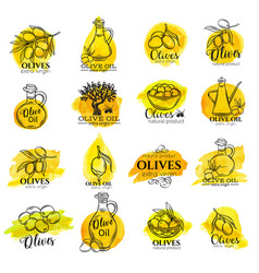 watercolor labels and signs of olive oil vector image