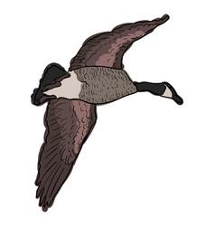 Canada goose in flight stock vector