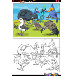 Cartoon birds animal characters coloring book page vector