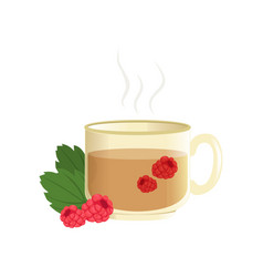 hot herbal tea in a transparent cup with raspberry vector image