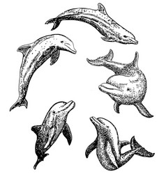 ink hand drawn dolphin icon set vector image