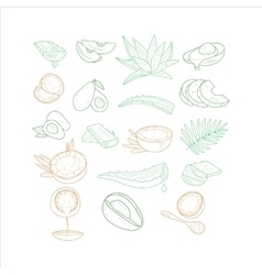 Avocado Aloe And Coconut From Different Angles vector image