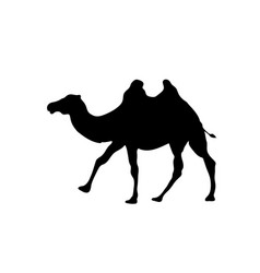 camel outline icon isolated on transparent vector image