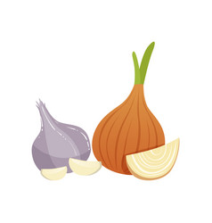 Garlic and onion bulbs natural remedies for cold vector
