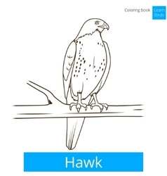 Hawk bird learn birds coloring book vector image