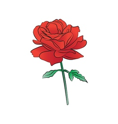 Rose light red vector image