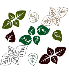 basil leaf basil herb outline vector image