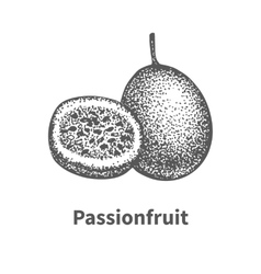 Doodle sketch hand-drawn passionfruit vector
