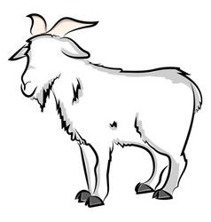 goat drawing on white background vector image