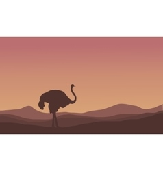 Silhouette of scenery ostrich in the hills vector image