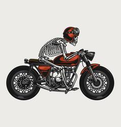 skeleton riding brat style motorcycle vector image