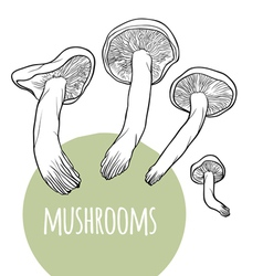 Set with black and white mushrooms vector image