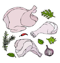 chicken or turkey body parts set fowl meat vector image