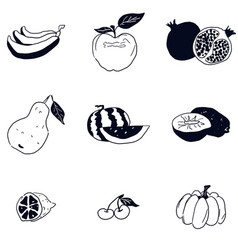 doodle fruit sketch black and white drawing vector image