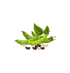 Green pods leaves kidney beans isolated soybeans vector