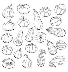 Hand drawn outline squash set autumn collection vector