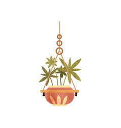 Hanging house plant in ceramic pot elegant home vector