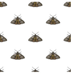 Moth icon in cartoon style isolated on white vector