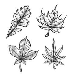 plant leaves sketch engraving vector image