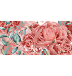 rose flowers watercolor background vector image