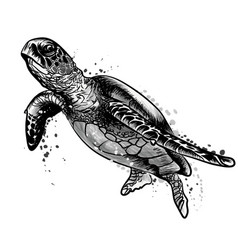 sea turtle black and white drawing vector image