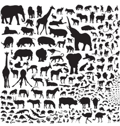 All the animals of africa vector
