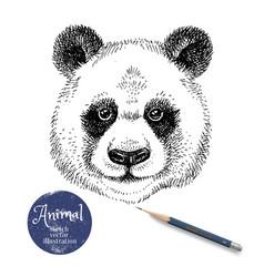 hand drawn sketch panda head isolated cute vector image