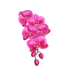 orchid summer tropical flower vector image