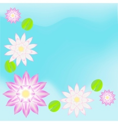 Pink waterlily card background vector