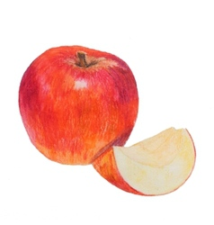 Watercolor colored pencils apple vector