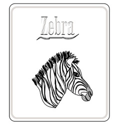 Zebra Hand drawn sketch isolated on white backgro vector image