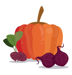 pumpkin beetroot vegetables food vector image vector image
