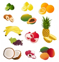 indian fruit vector image vector image
